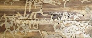 houten planken met houtworm